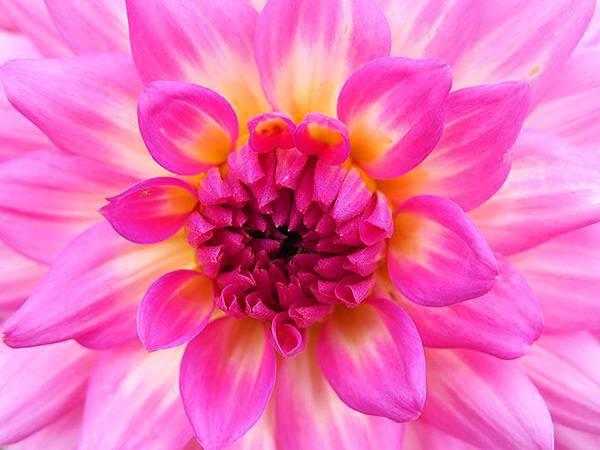 Asteraceae 3.JPG