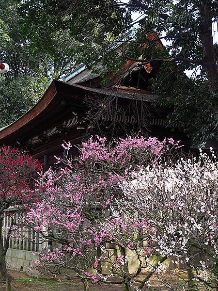 Osaka y12.JPG
