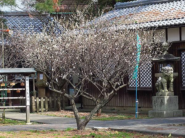 Tsuruga c3.JPG