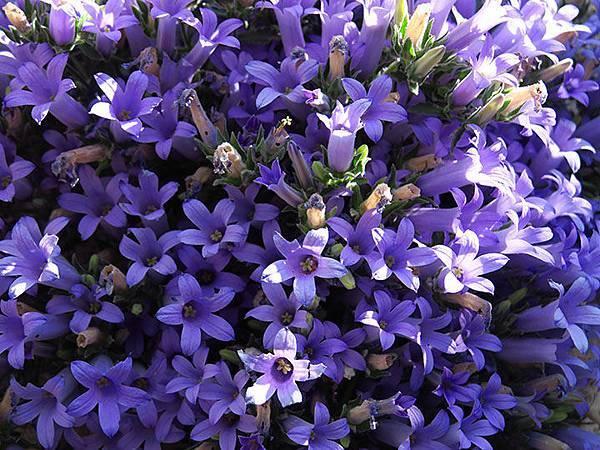 Greek flowers 1.JPG