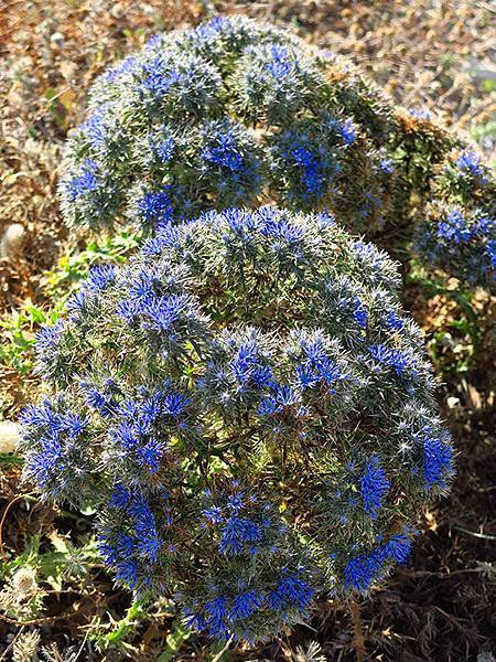 Greek flowers 4.JPG