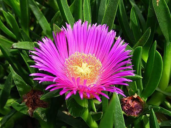 Greek flowers 3.JPG