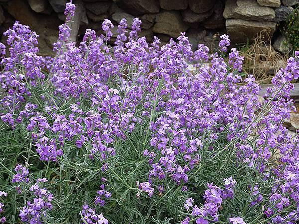 Greek flowers 14.JPG