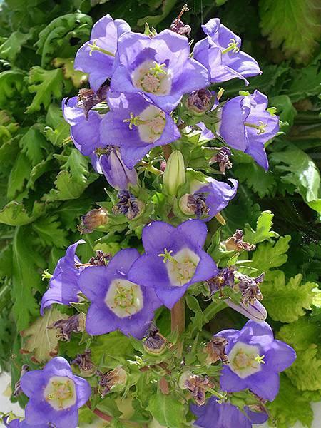Greek flowers 16.JPG
