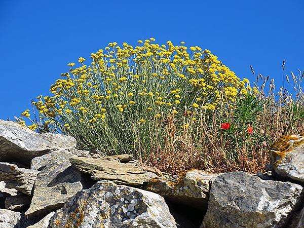 Greek flowers 19.JPG