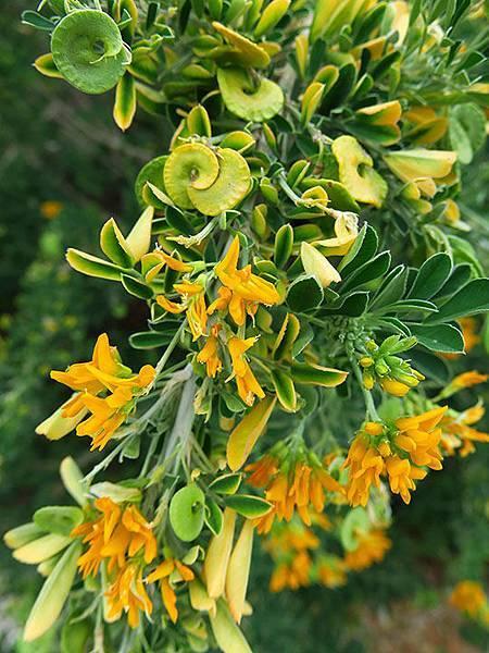 Greek flowers 29.JPG