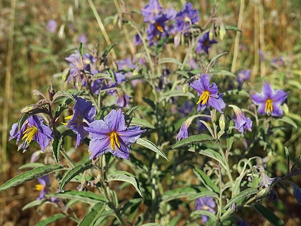 Greek flowers 30.JPG