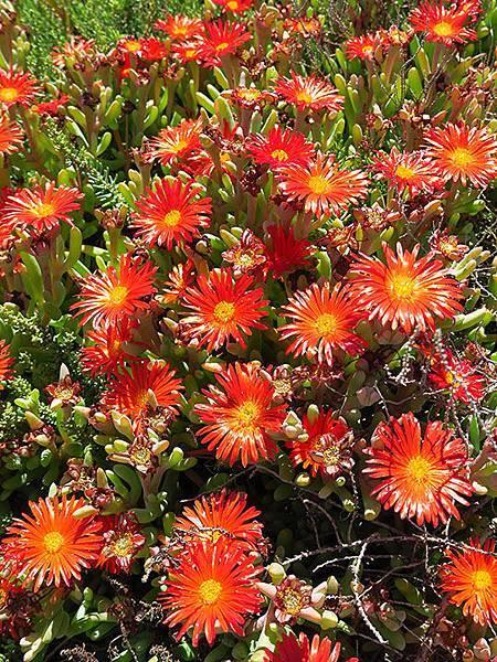 Greek flowers 28.JPG