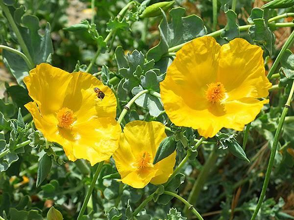 Greek flowers 34.JPG