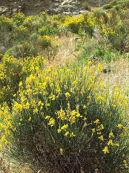 Greek flowers 37.JPG