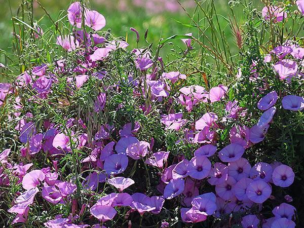 Greek flowers 35.JPG
