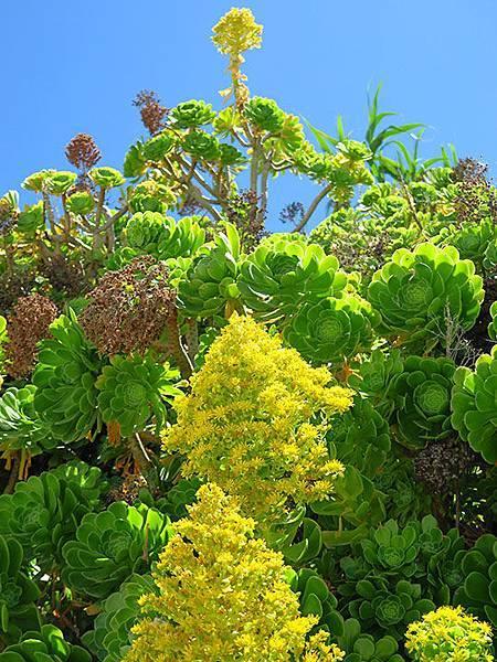 Greek flowers 39.JPG