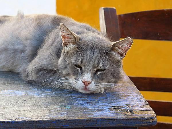 Island cats 3.JPG