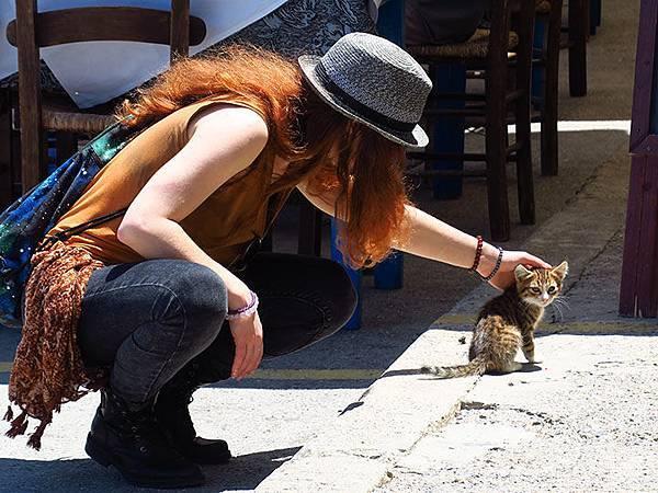 Island cats 2.JPG