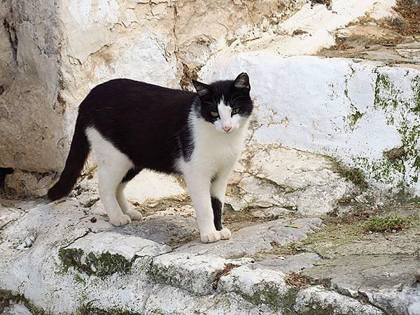Island cats 4.JPG
