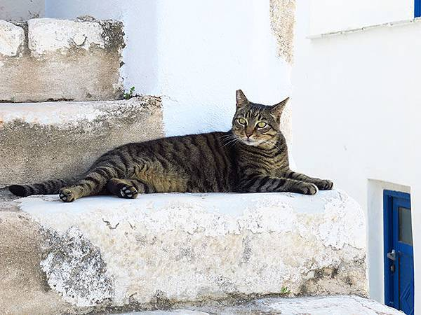 Island cats 10.JPG