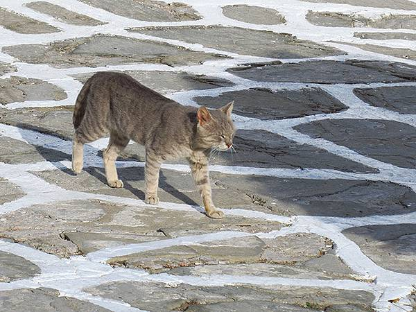 Island cats 6.JPG
