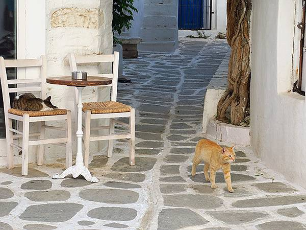 Island cats 8.JPG