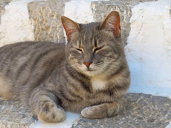 Island cats 14.JPG