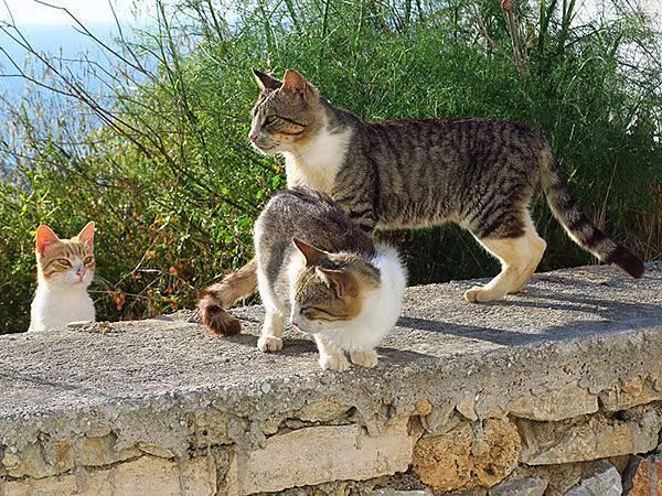 Island cats 12.JPG
