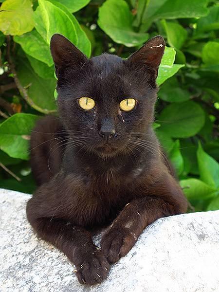 Island cats 13.JPG