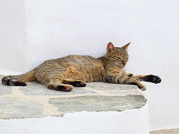 Island cats 15.JPG
