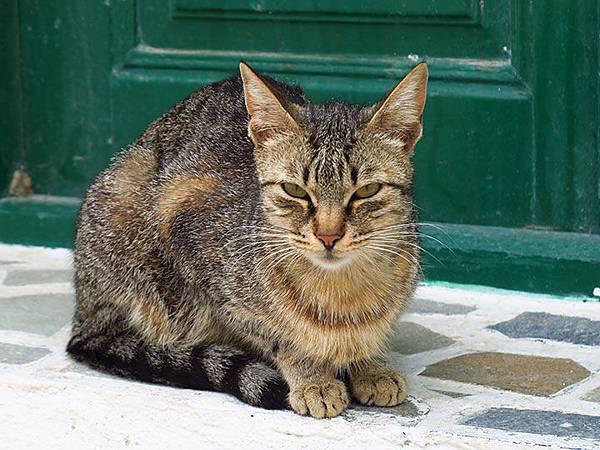 Island cats 18.JPG