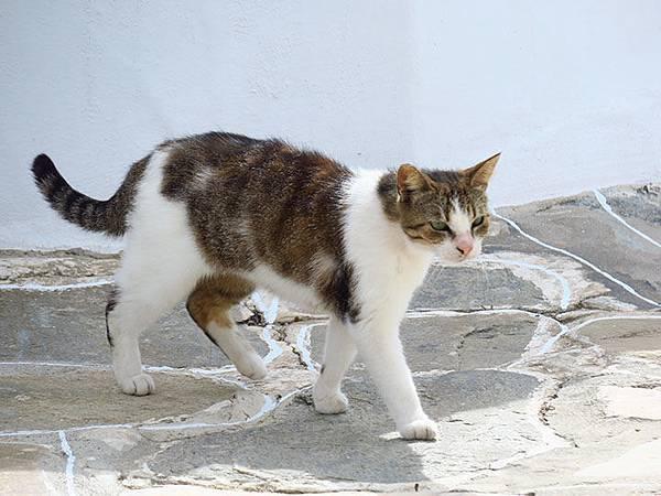 Island cats 20.JPG