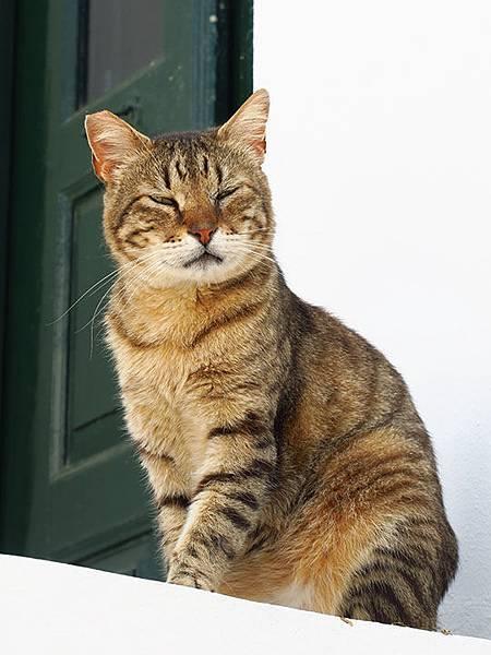 Island cats 21.JPG