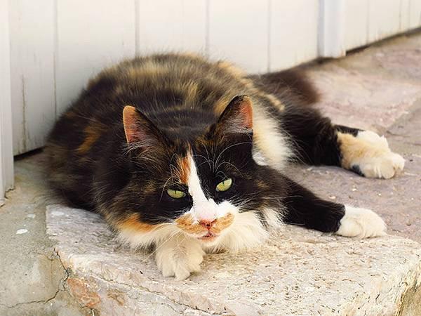 Island cats 19.JPG
