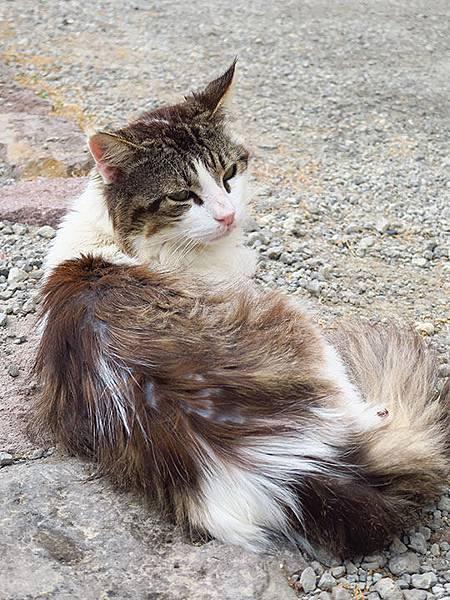 Island cats 17.JPG