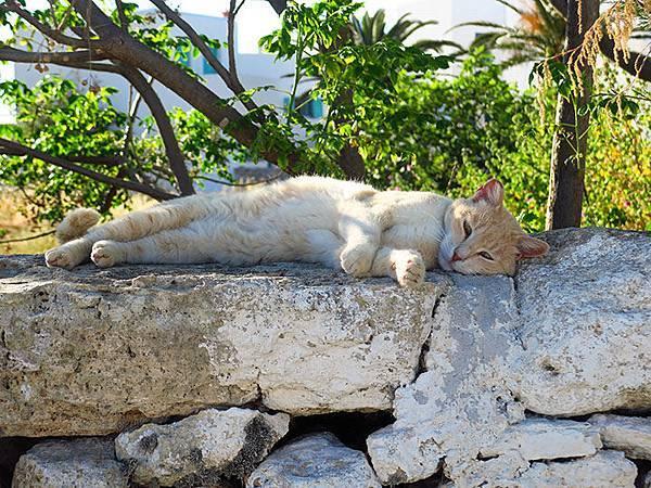 Island cats 23.JPG