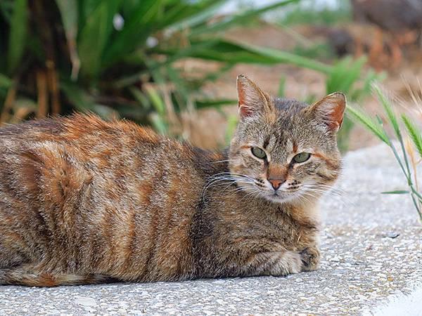 Island cats 22.JPG