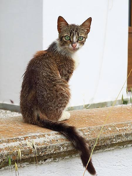 Island cats 25.JPG