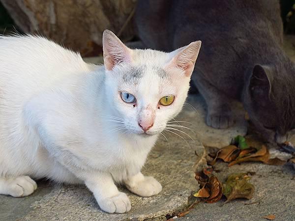 Island cats 26.JPG