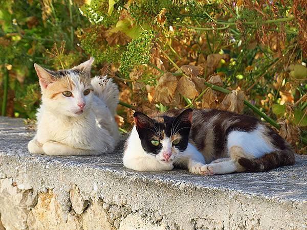Island cats 28.JPG