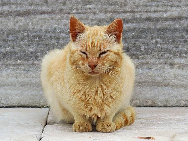 Island cats 27.JPG