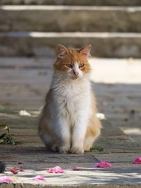 Island cats 33.JPG