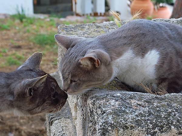 Island cats 32.JPG