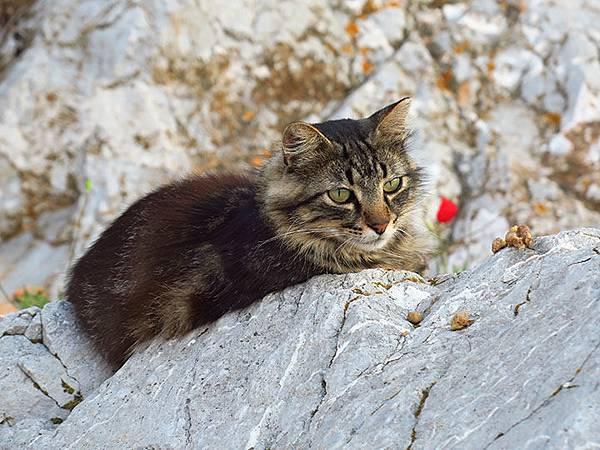 Island cats 31.JPG