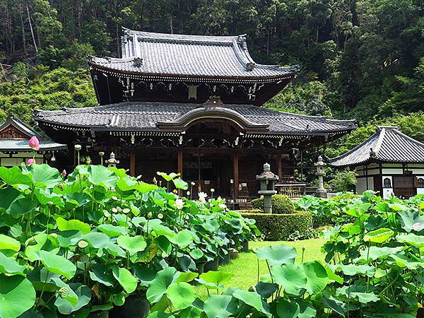 Kyoto mf1.JPG