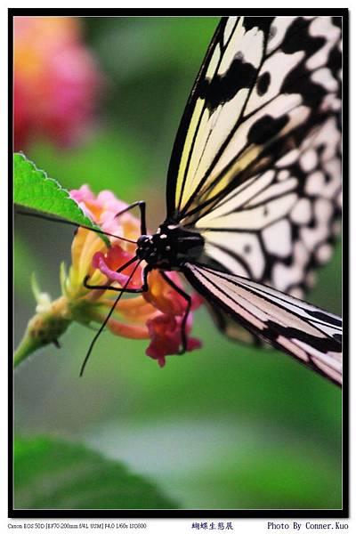 蝴蝶生態展