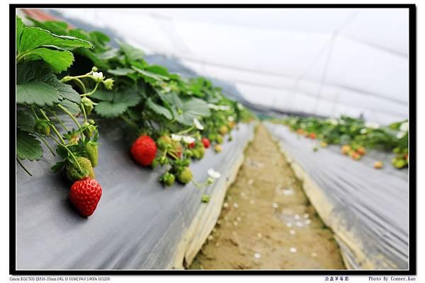 亞鑫草莓園