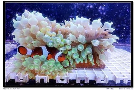 珊瑚小學堂