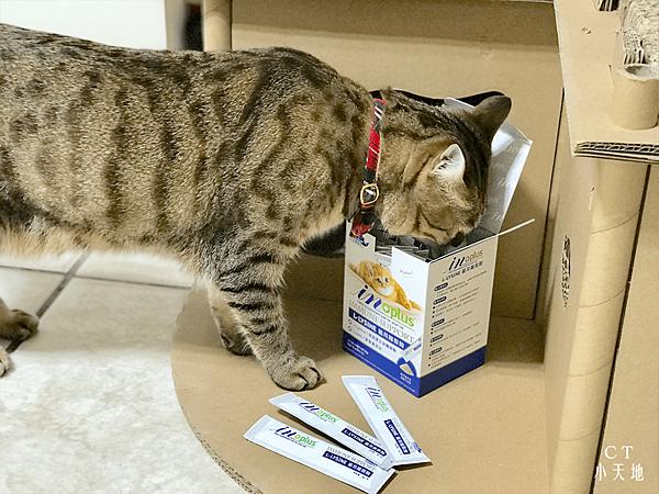 貓咪-營養品-Inplus-左旋-Lysine-離胺酸-必需胺基酸-葉黃素-鰹魚風味-保健食品