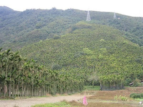 米亞灣內的『檳榔山』