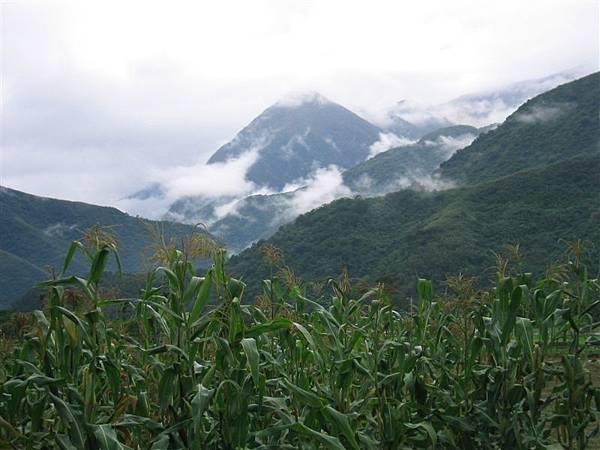大雨過後的山景-玉蜀黍葉看起來也好綠