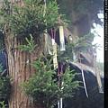 樹上祈福許願簽