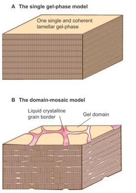 Corneal lipid