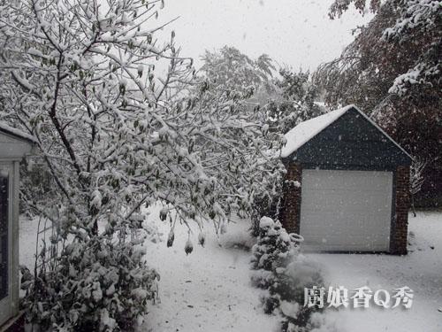 大雪紛飛2
